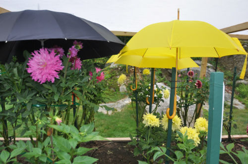 Stephen Ruttkamp's Garden