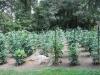 Schnerr Back Garden