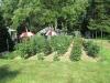 Schnerr Front Garden