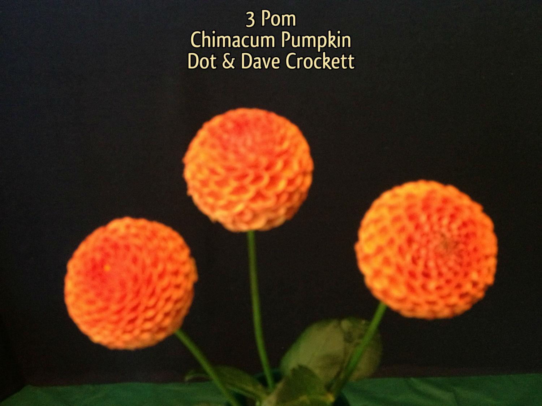 Chimicum Pumpkin