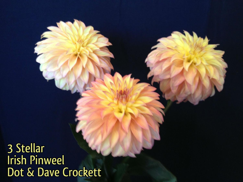 Irish Pinwheel