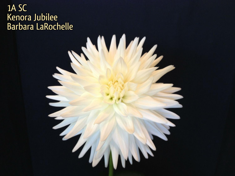 Kenora Jubilee